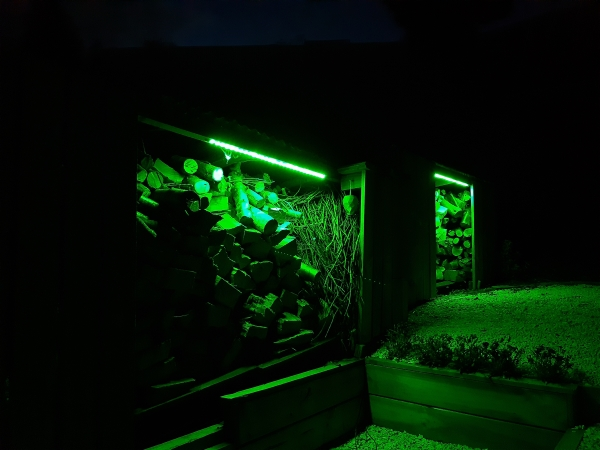 shed lights green