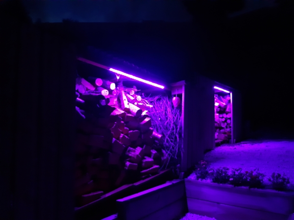 shed lights purple